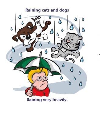 rainingcatsanddogs.JPG
