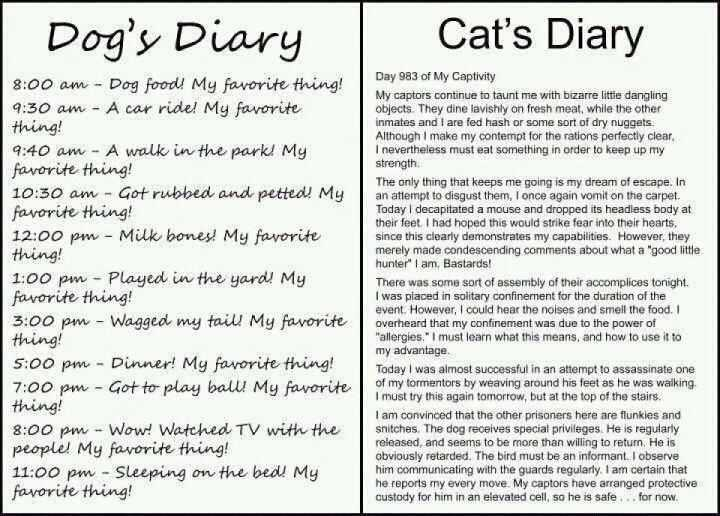 dog-and-cat-diary_1_1390036919.jpg_720x516