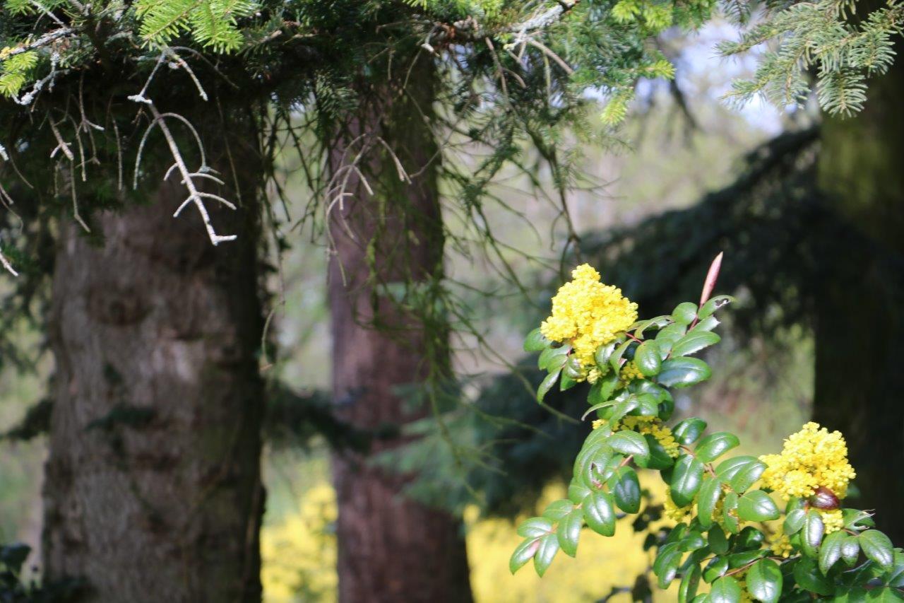 szarvas_arboretum_02.jpg
