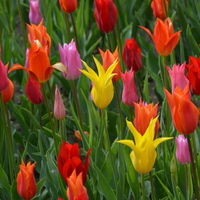 Tulipánvirágzás - 5 hely, amit tavasszal látnod kell!