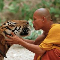 Buddhizmus és a zöld mozgalom