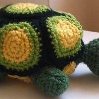 Mici, az örököreg teknős
