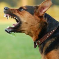 Állati harapások