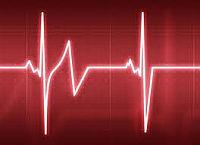 A szív felépítése és működése