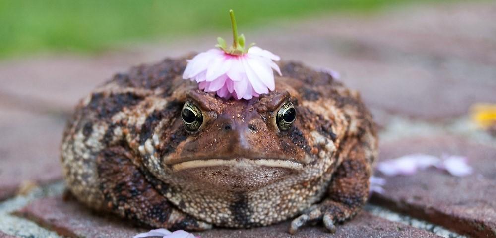 toad_princess.jpg