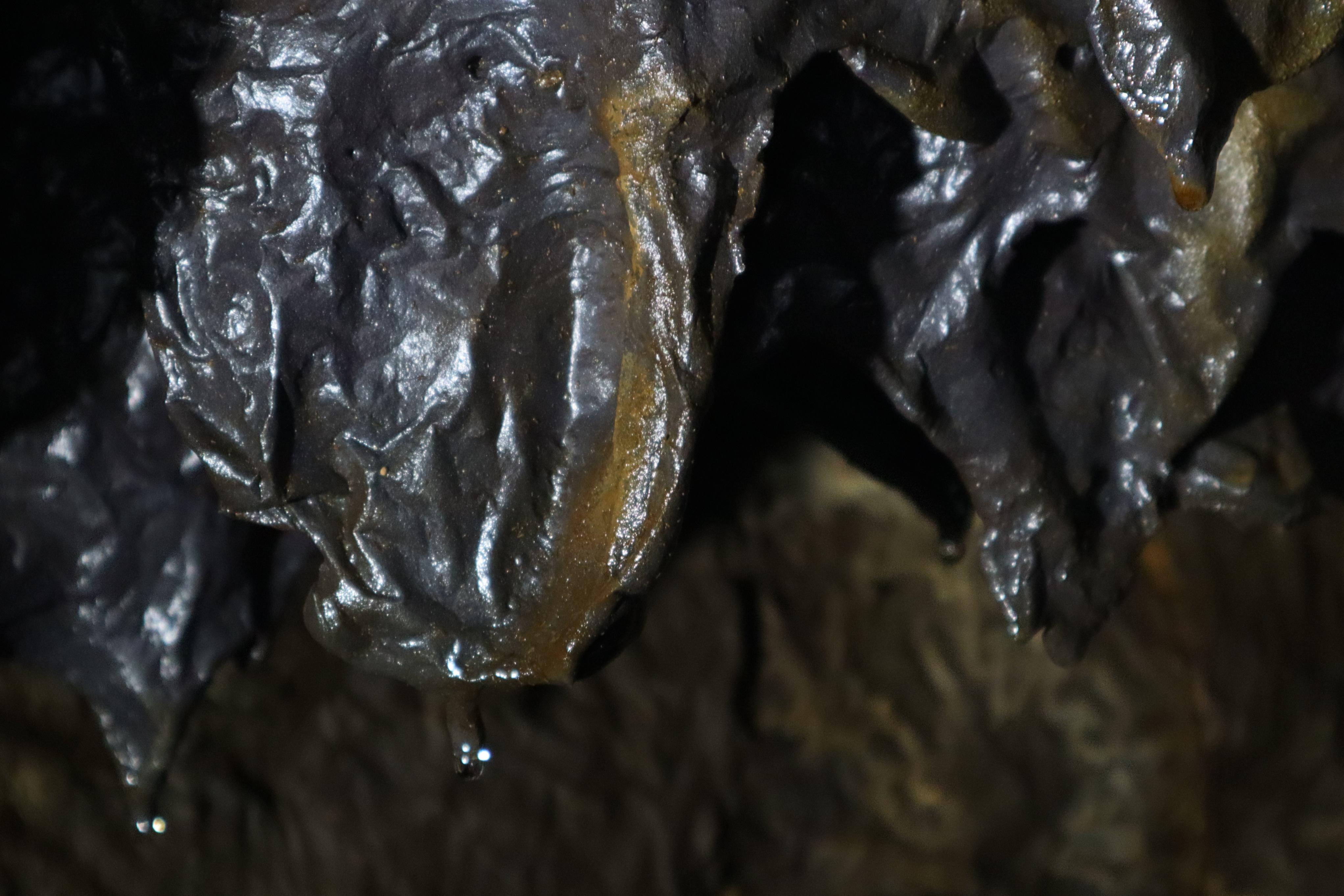 barlang6.jpg