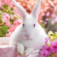 A húsvéti nyúl visszavonul