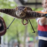 Macskakopter a túlvilágról
