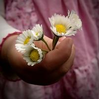 Megint virágok