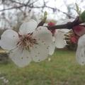 Március 25. hétfő - Gyümölcsoltó Boldogasszony