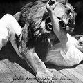 Nyolcvanhét éve halljuk az oroszlánüvöltést