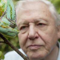 David Attenborough sikersorozata debütál az OzoneTv-n