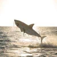 Jövő héten indul a Cápafesztivál