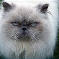 Állat enciklopédia: A macska
