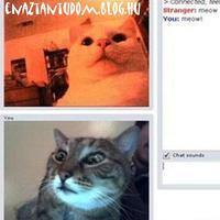 Macska-chat