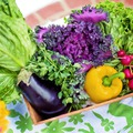 Endometriózis és étrendi kérdések