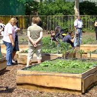 Szentendre is csatlakozhat a közösségi kert programhoz