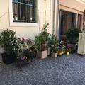 Csak hétvégén lehet kirakni virágokat a Dumtsa Korzóra