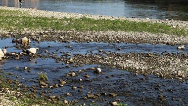 Paradicsom- és dinnyepalánták nőnek a Bükkös-patak torkolatánál