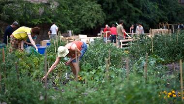 Zöld utat kapott a közösségi kert program Püspökmajoron
