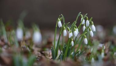 Visszatér a tavasz, jövő héten 15 fokot is mérhetünk
