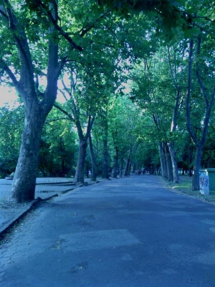 Mesélő fák a Ligetben