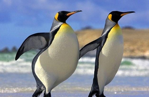 Cikkajánló a hétvégére: élelmiszerpazarlás és a pingvinek hízása, szennyvízelvezetés és energiatakarékos autógumik