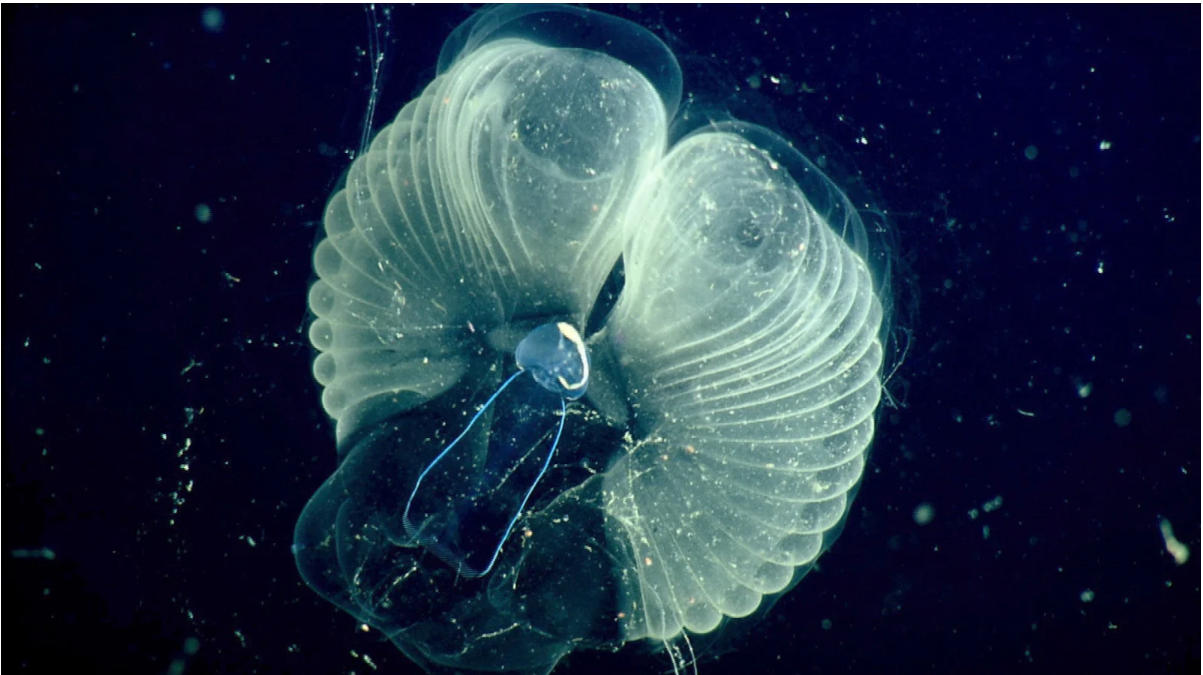 Cikkajánló hétvégére: undorító plankton, Covid-hatás és atombiztos-e az atom