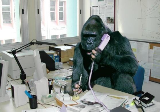 gorilla_at_work.jpg