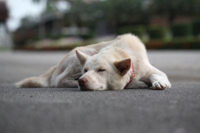 kutyaalvo2.jpg