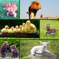 BABY ANIMALS - 20 állatkölyök neve ANGOLUL!