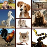 ÁLLATHANGOK ANGOLUL! - 30 állatnyelv szól hozzád angol tolmácsolásban