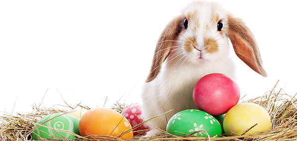 cute-happy-easter-photos.jpg