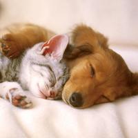 Matura Exam Practice - everyone should keep a pet