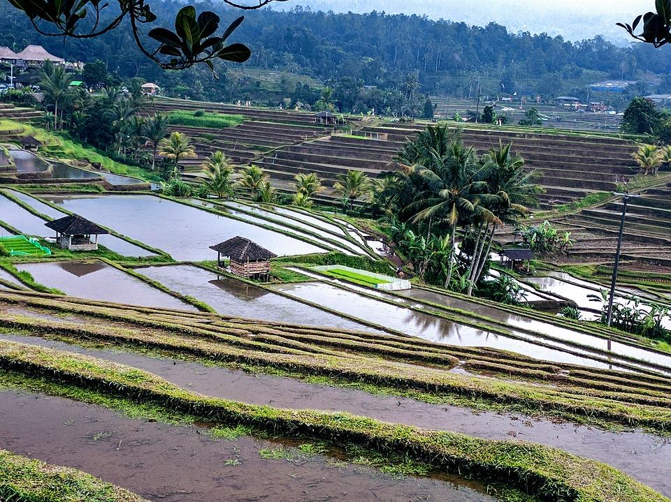 rice-terrace-2633612_960_720.jpg