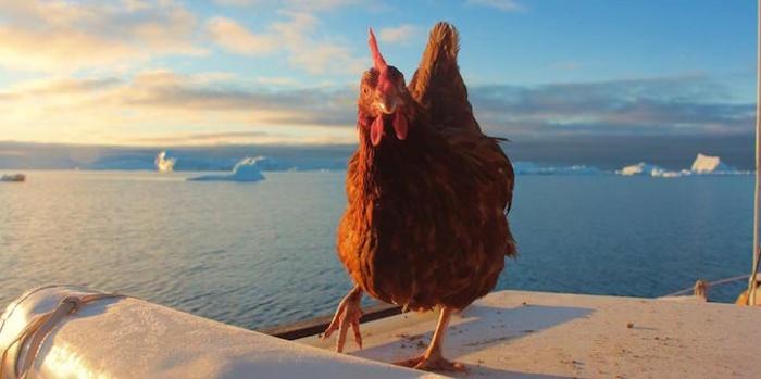 chicken_09.jpg