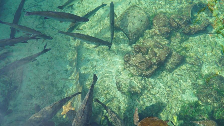 http_2f_2fcdn_cnn_com_2fcnnnext_2fdam_2fassets_2f180801150641-santa-cruz-colombia-underwater.jpg