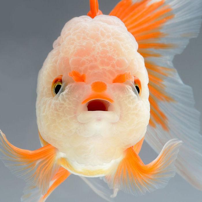 the-elegant-and-fantastic-poses-of-aquarium-fish-captured-by-a-thai-photographer-5b709173f0866_700.jpg