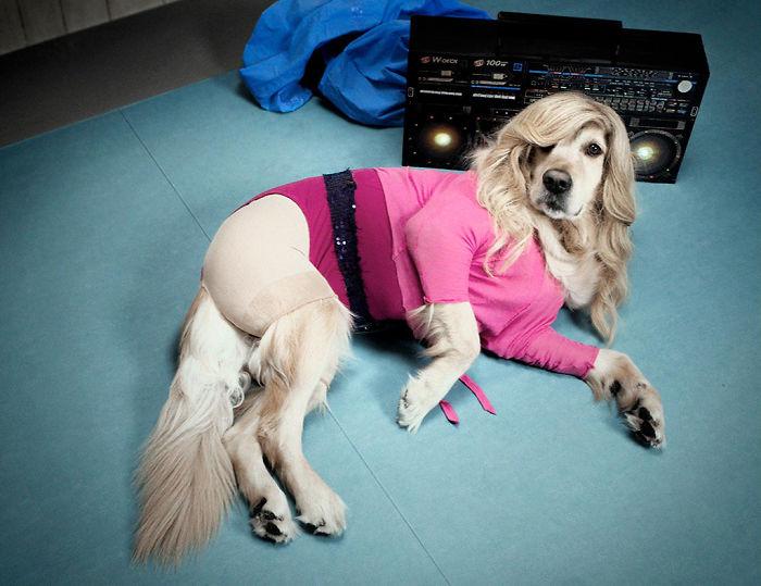 iconic-madonna-scenes-dog-recreation-maxdonna-vincent-flouret-5b5ae47b961dc_700.jpg