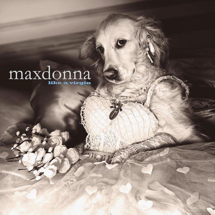 iconic-madonna-scenes-dog-recreation-maxdonna-vincent-flouret-5b5ae47f07278_700.jpg