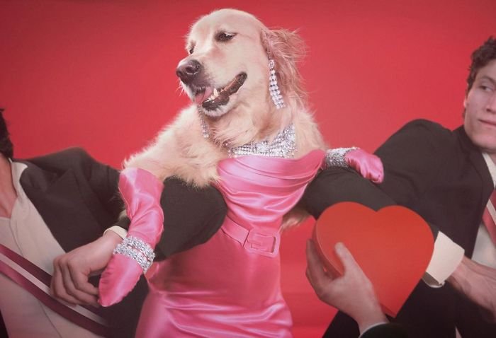iconic-madonna-scenes-dog-recreation-maxdonna-vincent-flouret-5b5ae482adde9_700.jpg