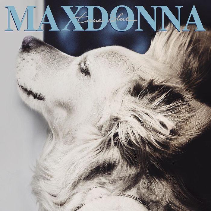iconic-madonna-scenes-dog-recreation-maxdonna-vincent-flouret-5b5ae4861d000_700.jpg