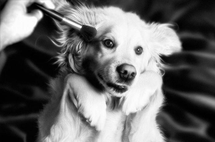 iconic-madonna-scenes-dog-recreation-maxdonna-vincent-flouret-5b5ae48a3abc5_700.jpg