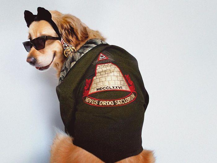 iconic-madonna-scenes-dog-recreation-maxdonna-vincent-flouret-5b5ae491250bb_700.jpg