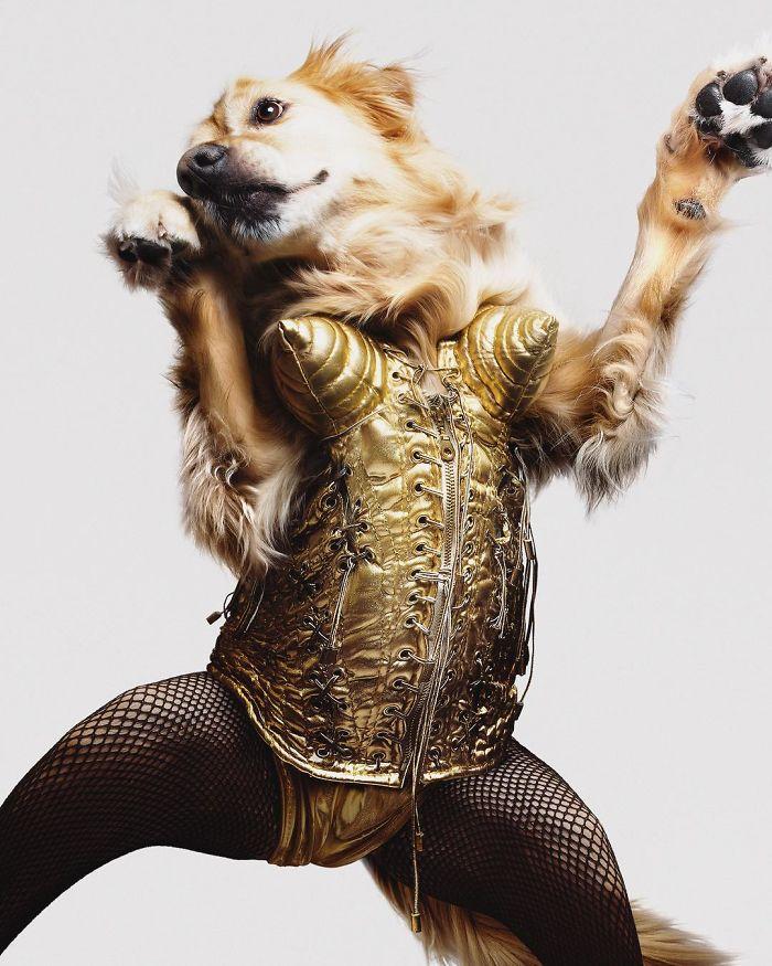 iconic-madonna-scenes-dog-recreation-maxdonna-vincent-flouret-5b5ae494b9eea_700.jpg