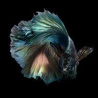 Egy thai fotós lélegzetelállító akváriumi fotói