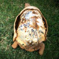 Mindenkinek jár egy második esély, mint például Freddynek a teknősbékának