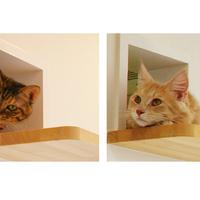 Lakás macskákhoz alakítva