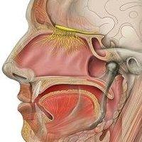 Javít-e a krónikus orrbetegek szaglásán a FESS műtét?