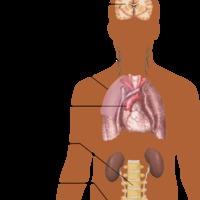 TBC fül- orr- gégészeti vonatkozásai